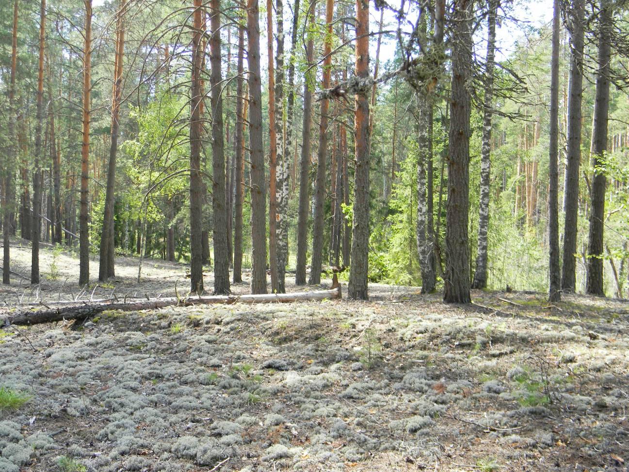 3 фазы экологического преемства